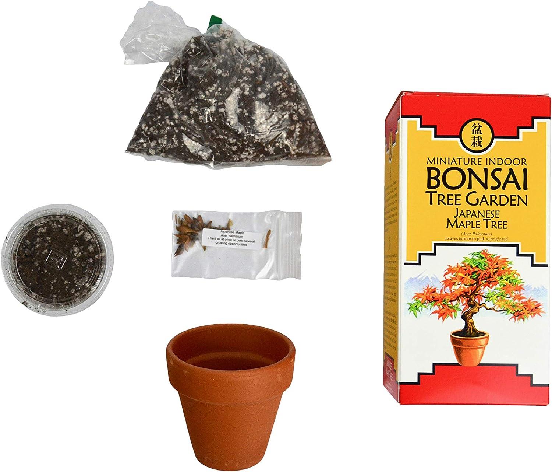 Amazon Com Bonsai Tree Garden Kit Diy Grow Kit With Japanese Maple Tree Seeds Complete Bonsai Gardening Set Includes Care Guide Bonsai Tree Seeds Compost Soil Terr Cotta Planting Pot Garden