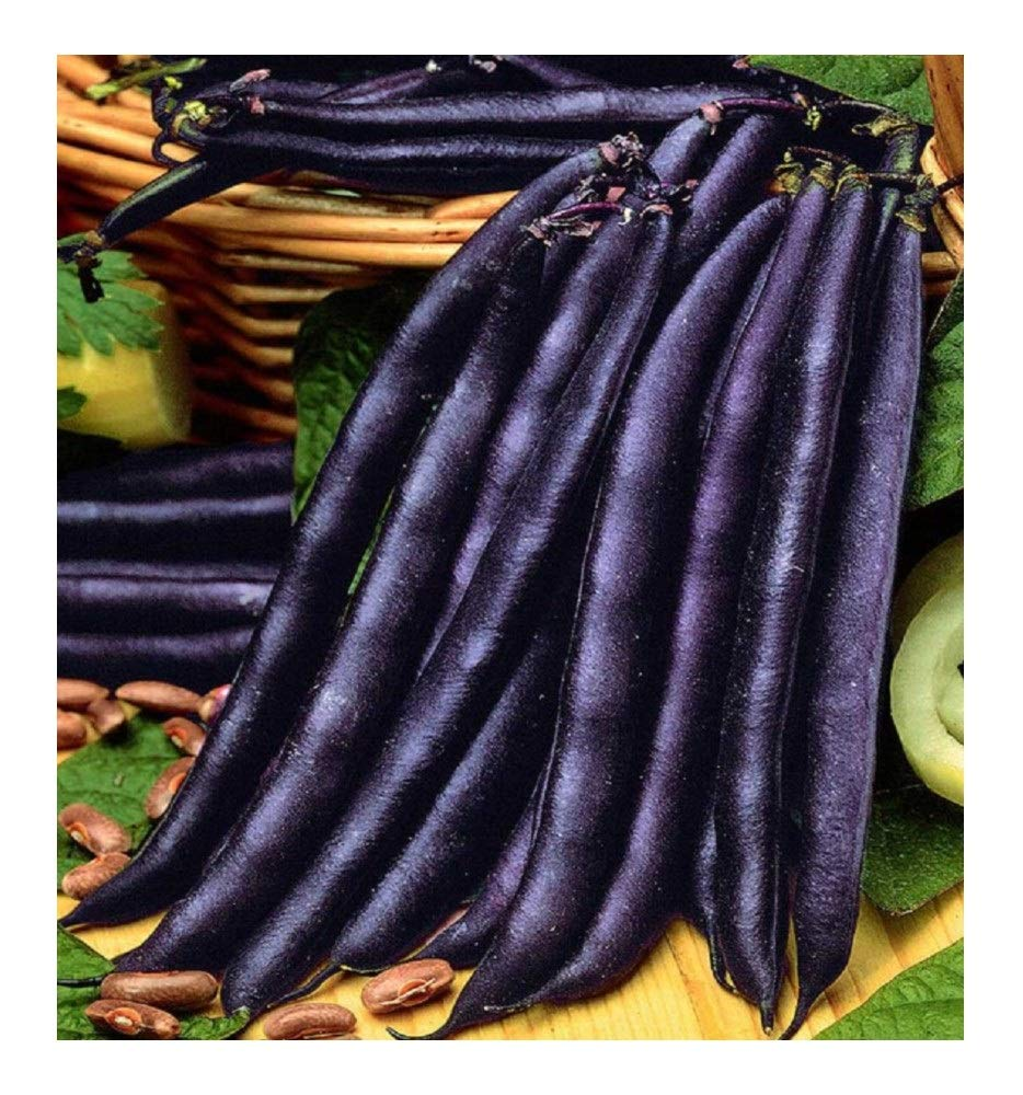 PREMIER SEEDS DIRECT - Dwarf French Bean - Purple Queen - 200 Italian Seeds