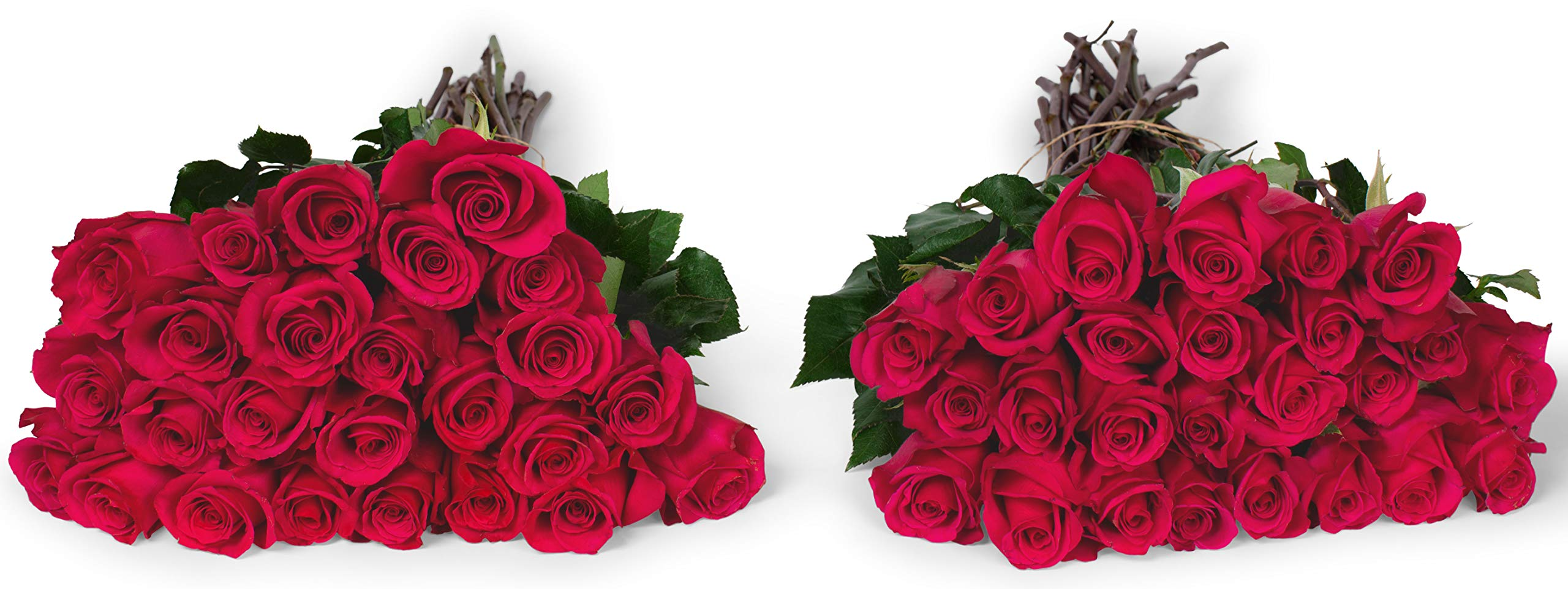 Benchmark Bouquets 50 Hot Pink Roses Farm Direct (Fresh Cut Flowers) by Benchmark Bouquets