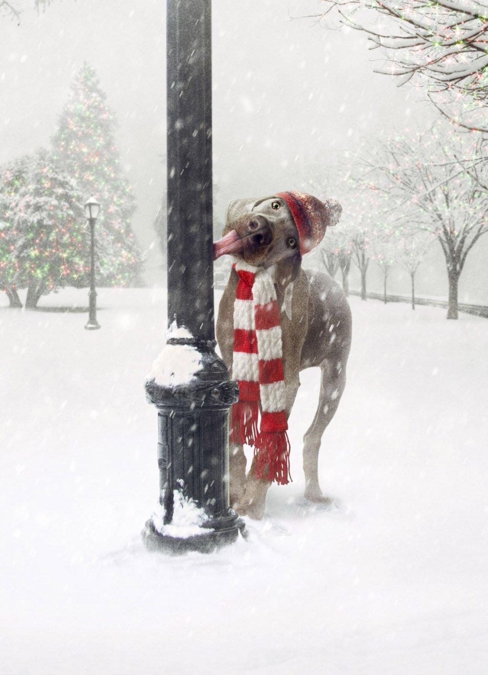 Amazon.com : Avanti Press 32528 Christmas Cards, Frozen Greetings ...