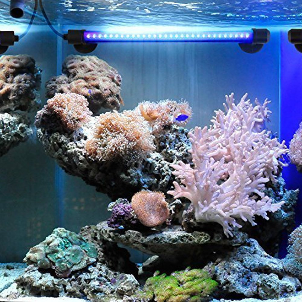 JOYTUTUS iluminación Acuario, LED Lámpara Acuario Luces del Acuario, Sumergible Submarino Agua Luces a LED de Cristal, Blanco Luminosa Eccelente de ...
