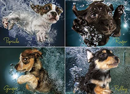 Willow Creek Press Underwater Puppies Jigsaw Puzzle Rejects from Studios 709786035014 1000-Piece