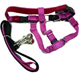 Freedom No Pull Harness and Leash Training Kit Raspberry Large