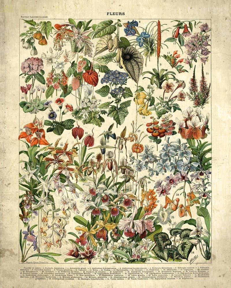 /Flower Picture/ francese fiori Fleurs vintage Print 2/ /Home Decor/ /Flower Art/ /VP1040UK /Living Room/ /soggiorno Art/ /Flower poster/ Coton