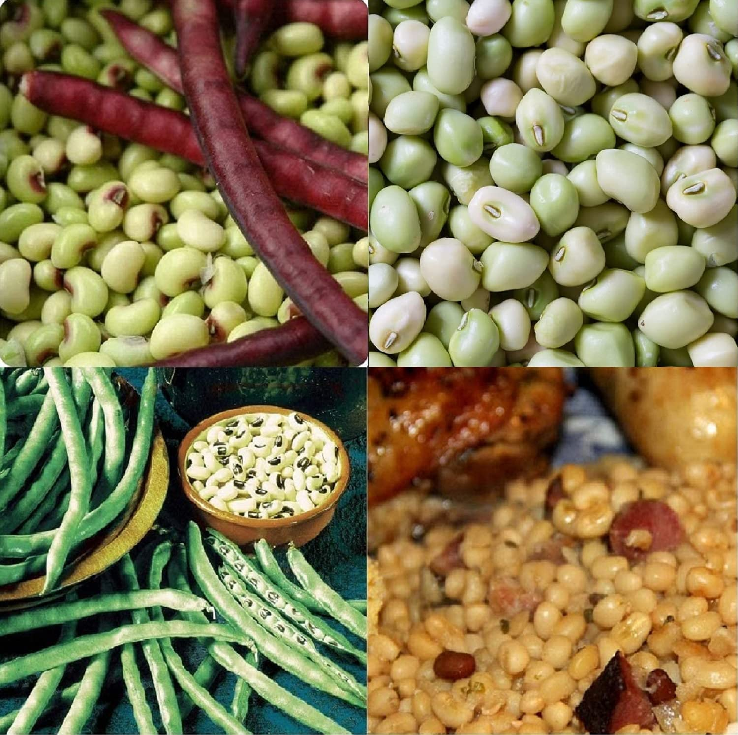 David's Garden Seeds Collection Set Southern Pea (Cowpea) 3333 (Multi) 4 Varieties 400 Non-GMO, Open Pollinated Seeds