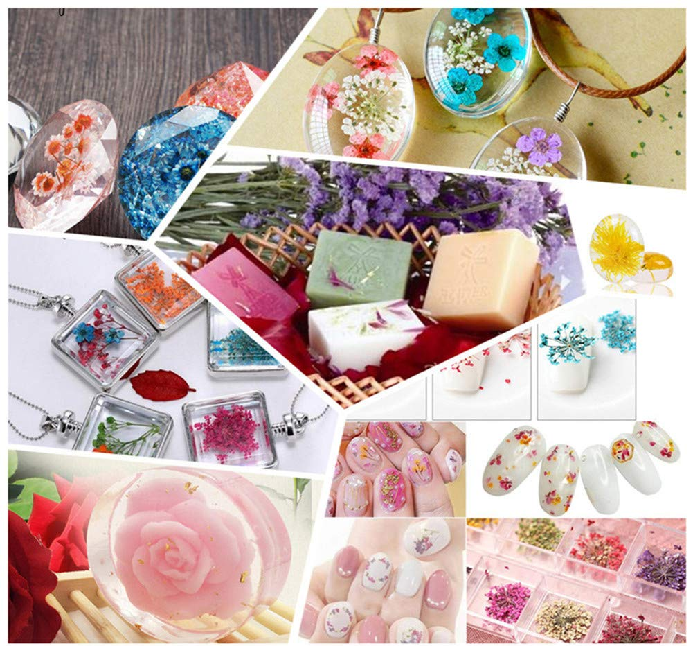 White Assorted Nature Dried Flowers Pressed Flowers Leaves Mixed Pack Scrapbooking Embellishments for DIY Resin Ornament Crafts Candle Making