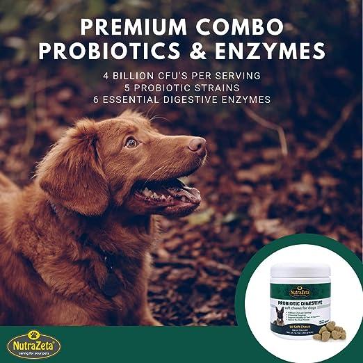 Amazon.com: Probióticos Premium para perros – 90 ...
