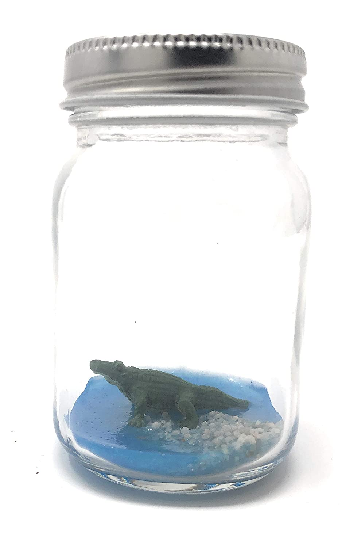 World's Smallest Alligator Desk Pet With Adoption Certificate In Mini Glass Mason Jar