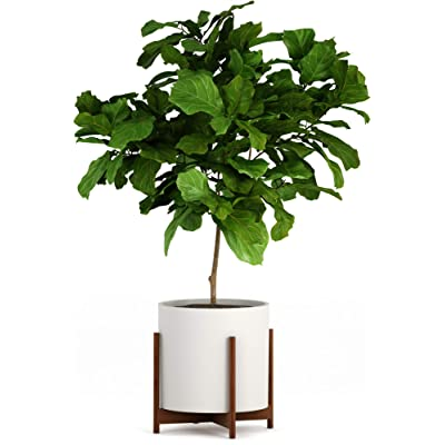 "Fox & Fern Wide Plant Stand - Acacia - EXCLUDING 15"" White Ceramic Planter Pot : Garden & Outdoor"