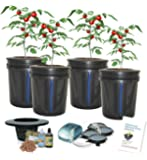 Deep Water Culture BUBBLER 4-site Bucket hydroponic system (5-Gal) H2OtoGro