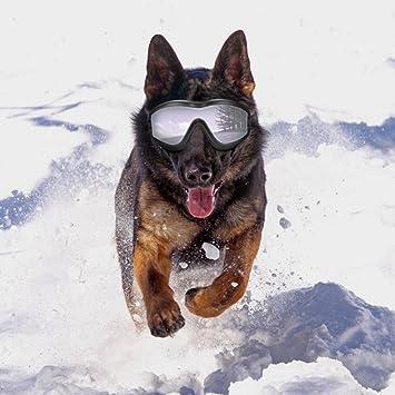 b873dfe906 Sue Supply Gafas de sol para perro, resistentes al viento, a prueba de sol,  protección UV, gafas de protección para mascotas, tamaño grande: Amazon.es:  ...
