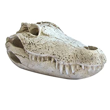 Resin Crocodile Skull Fake Taxidermy Croc Or Gator Alligator Head