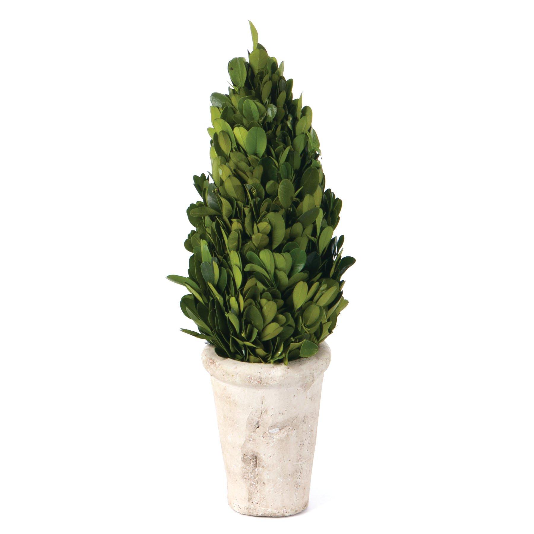 Skalny Indoor Preserved Boxwood Cone Topiary, 4 x 12'' by Skalny