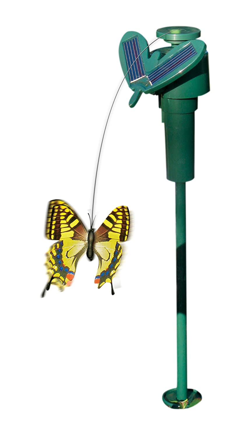 amazon com fascinations solar butterfly colors may vary toys
