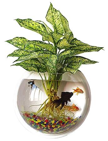 Amazon.com : Outgeek Wall Fish Tank Hanging Clear Acrylic Fish ...