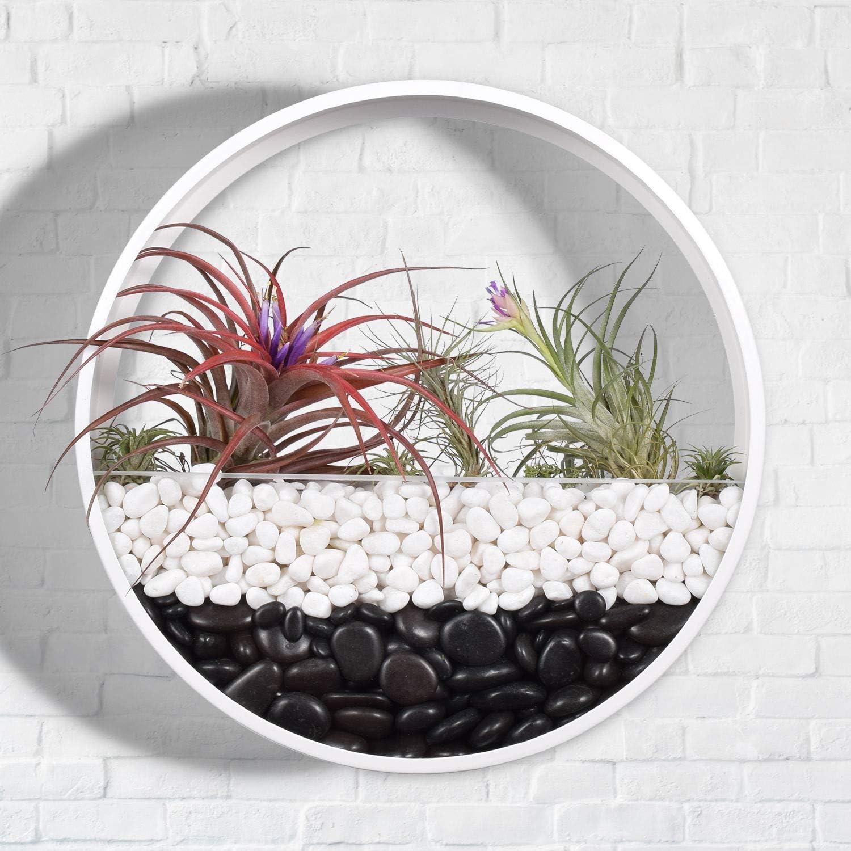 Modern Indoor Succulent Planter Metal Iron Circle Round Wall Hanging Planter Largest 12 , White