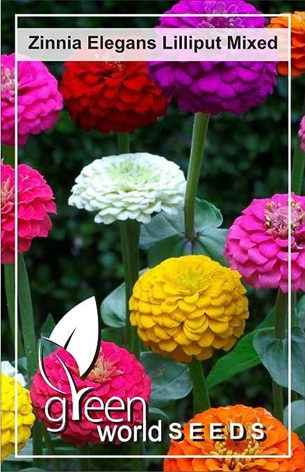 Green World Zinnia Elegans Liliput Mix Seeds 50 Nos Amazon In