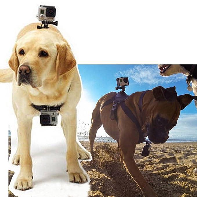 HOPCENTURY Arnés del perro con cámara soporte GoPro Accesorios ...