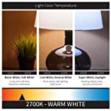 Sunlite 80648 LED Chandelier Filament Style Light