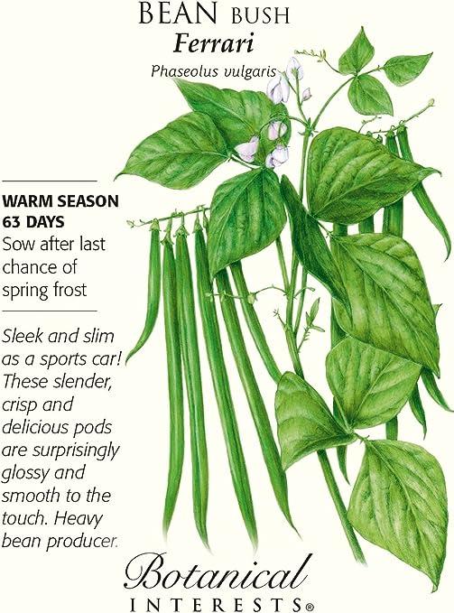 15 grams Organic Blue Lake 274 Bush Bean Seeds