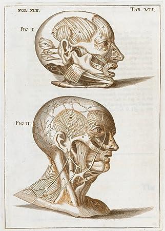 Amazon.de: Vintage Anatomie Muskeln der Kopf und das Gesicht von ...