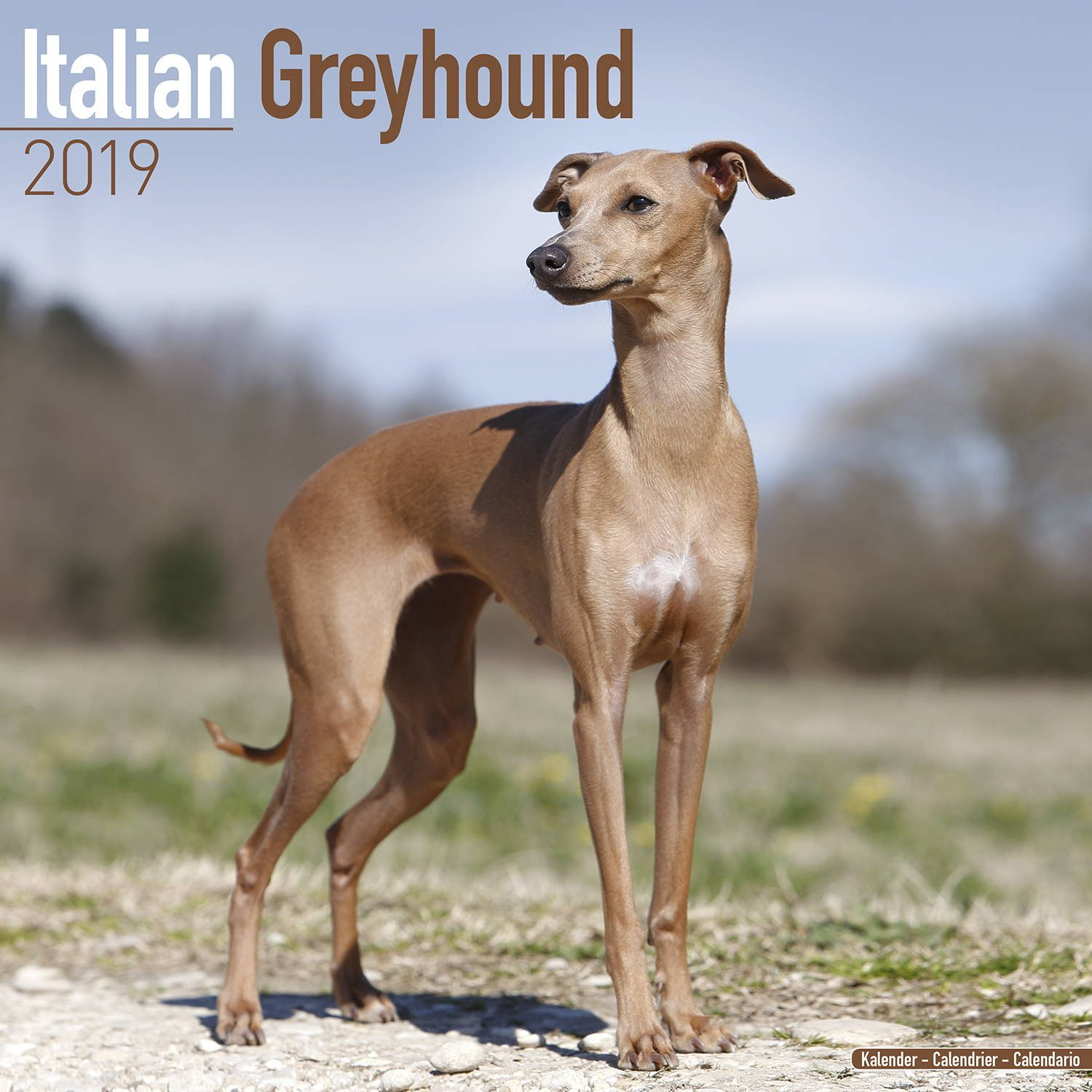 Italian Greyhound Calendar 2019 - Dog Breed Calendar - Wall Calendar 2018-2019