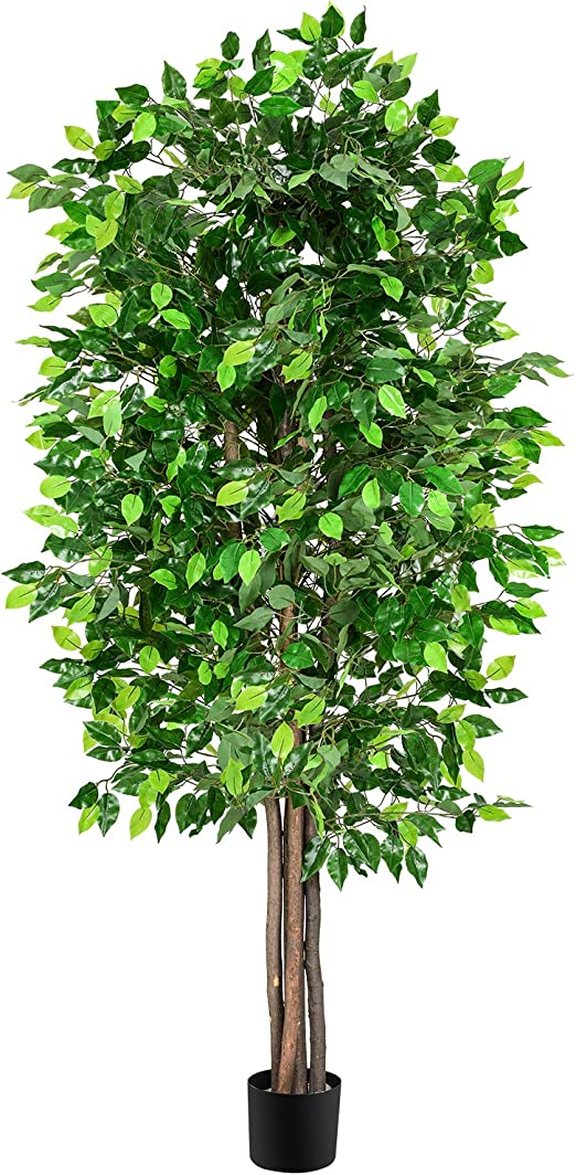Amazon Com Woooow 6ft Artificial Ficus Tree Silk Tree In Planter Ficus Tree With Green Leaves And Natural Trunk Beautiful Fake Plant For Living Room Balcony Corner Decor Indoor Outdoor Use Home Kitchen,Steamed Broccoli Brockly