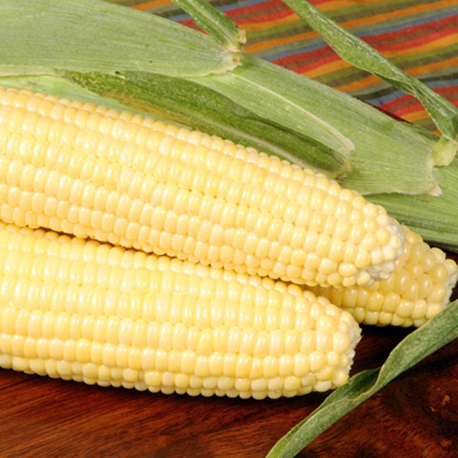Bodacious R/M Hybrid Corn Garden Seeds - 5 Lb - Non-GMO, SE (Sugary Enhanced) Vegetable Gardening Seeds
