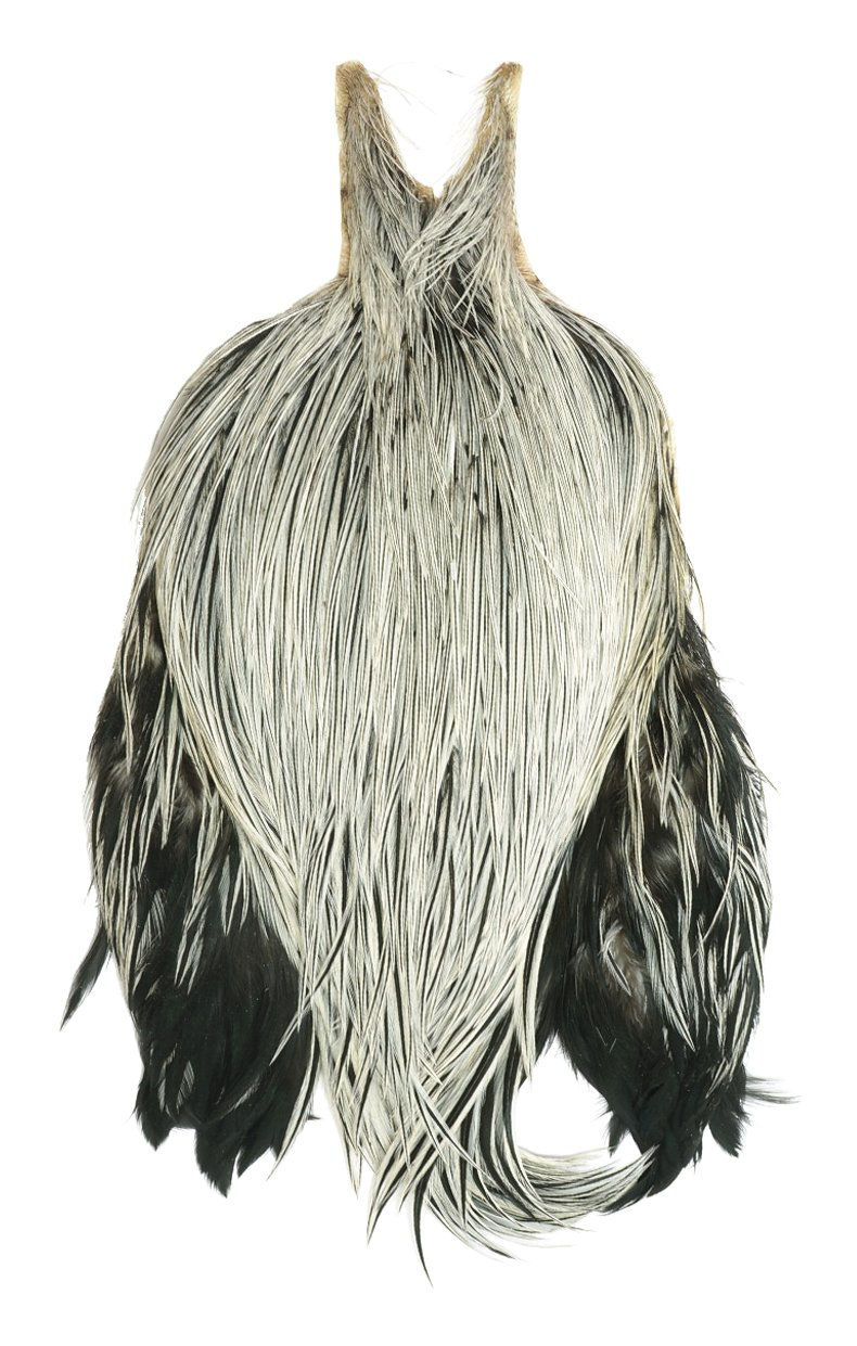 Rooster Neck, Grade #1 - badger