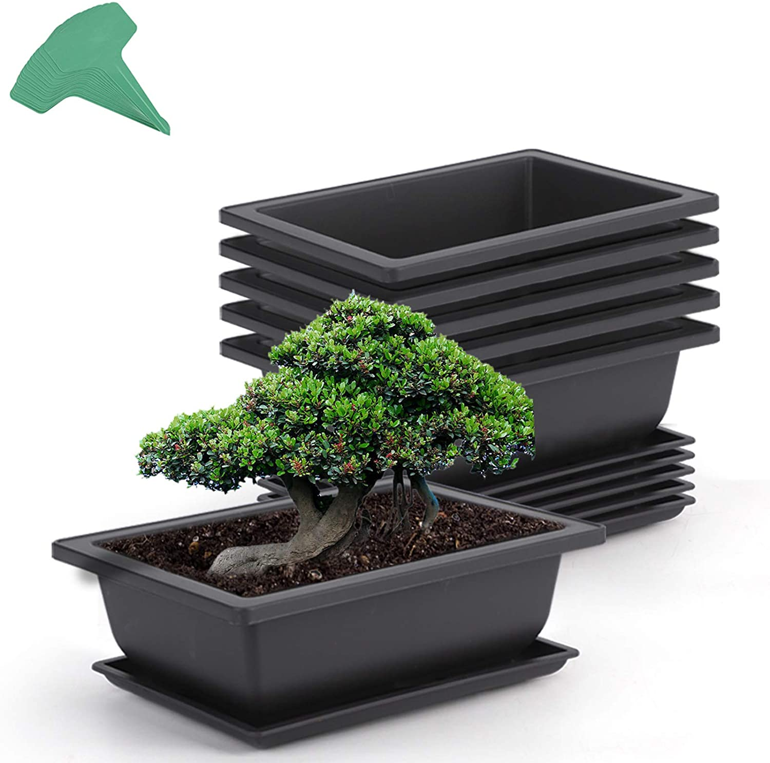 Amazon Com Growneer 6 Packs 9 Inches Bonsai Training Pots With 15 Pcs Plant Labels Plastic Bonsai Plants Growing Pot For Garden Yard Office Living Room Balcony And More Garden Outdoor