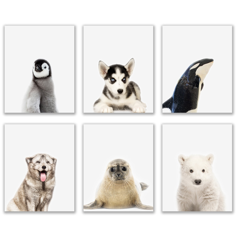Crystal Baby Arctic Animals Poster Prints - Set of 6 (8x10) Adorable Furry Portraits Wall Art Nursery Decor - Siberian Husky - Killer Whale Orca - Arctic Fox - Seal - Penguin - Polar Bear
