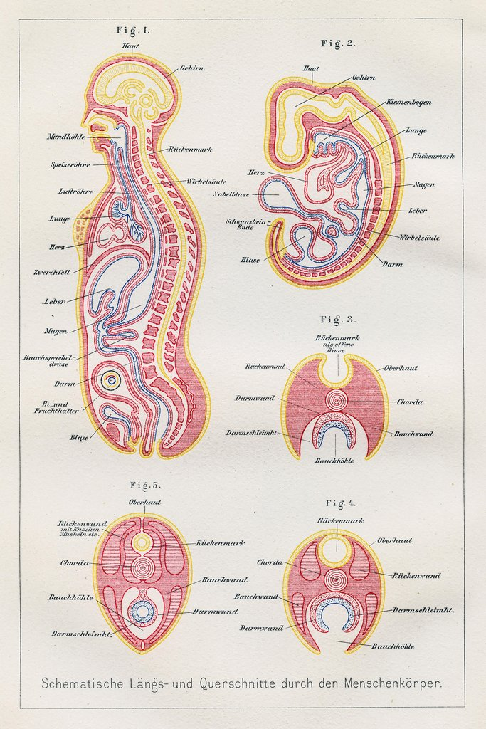 Erfreut Human Body Anatomy Poster Galerie - Anatomie Ideen - finotti ...