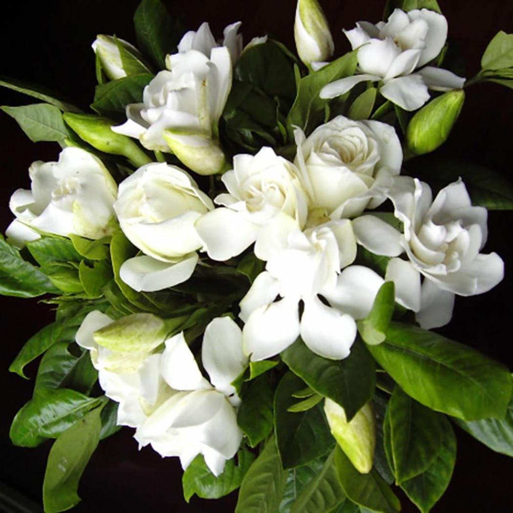 Bluelans 100 Pcs Gardenia Cape Jasmine Seeds Fragrant White Flower Bonsai Garden Decor