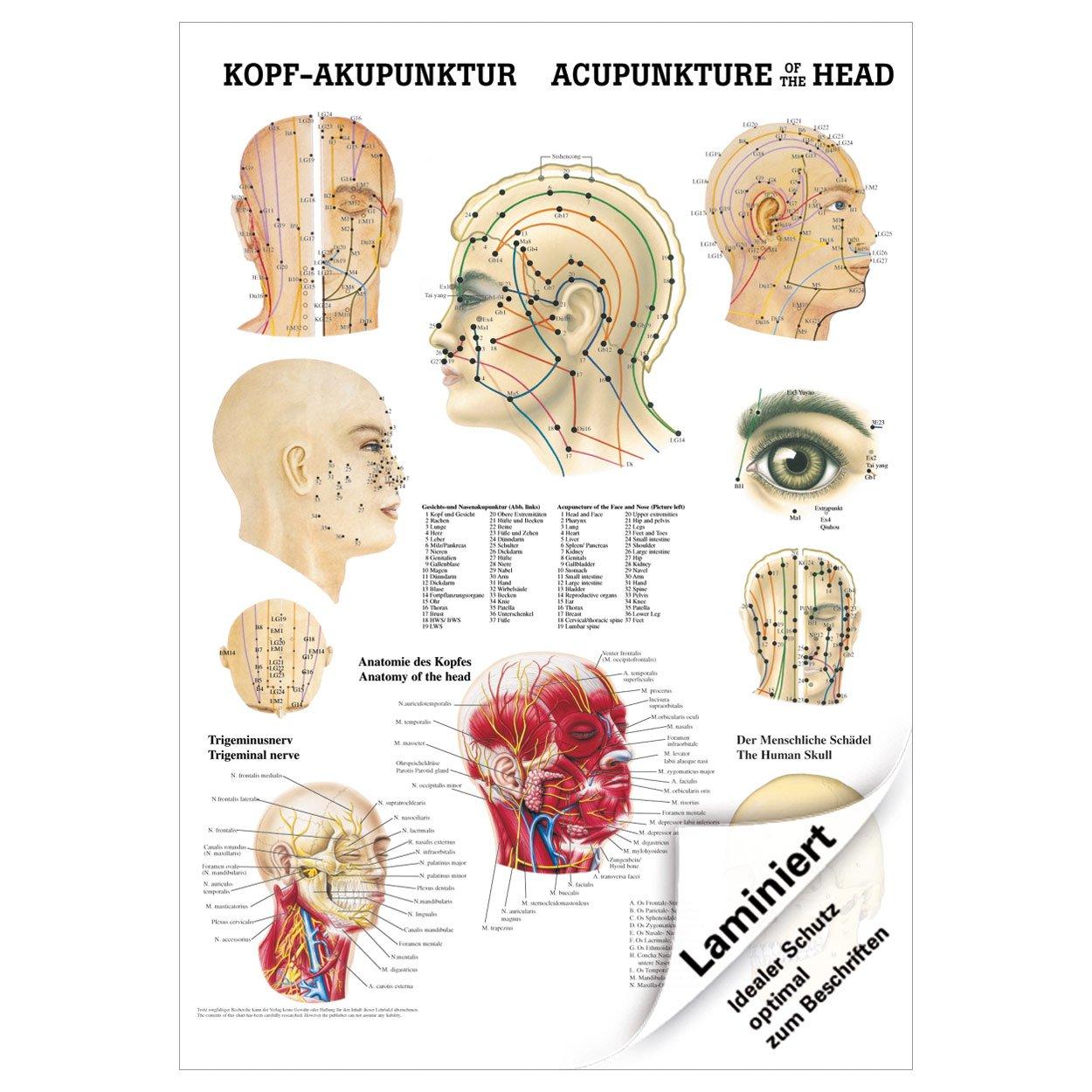 Charmant Die Anatomie Des Kopfes Fotos - Menschliche Anatomie Bilder ...
