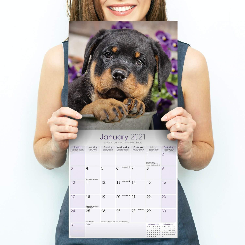 Puppies 2021 Puppy Calendar 15/% OFF MULTI ORDERS! Rottweiler