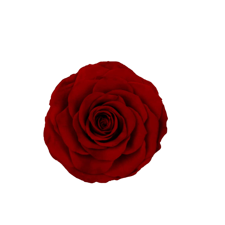 Jumbo Natural preserved roses 9-10 cm