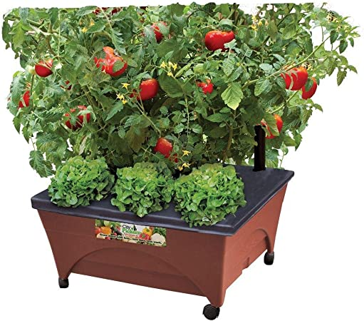 Containers for tomatoes