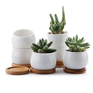 T4U 2.5/2.75/2.75 Inch Ceramic White Collection NO.31 Succulent Plant Pot/Cactus Plant Pot Flower Pot/Container/Planter with Bamboo Trays Package 1 Pack of 6