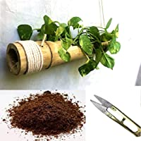 RAREPRODUCTS Bamboo Planter Hanging Pot with Coco PEAT and Small Garden Plant Cutter