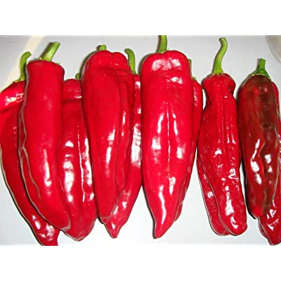 Corno di Toro Rosso Pepper Seeds (25 Seeds) : Garden & Outdoor