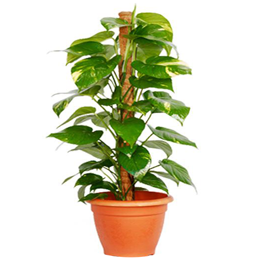 indoor-plants-care