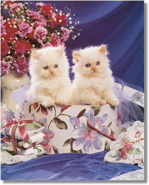 Picture Persian Kitten Cat Art Print
