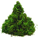 ByYou Fresh Green Super Soft Preserved Forest Moss,8oz (200 cubic inch)