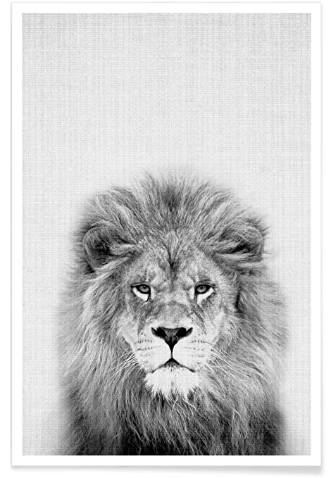 Juniqe posters 20x30cm black white lions design lion format portrait
