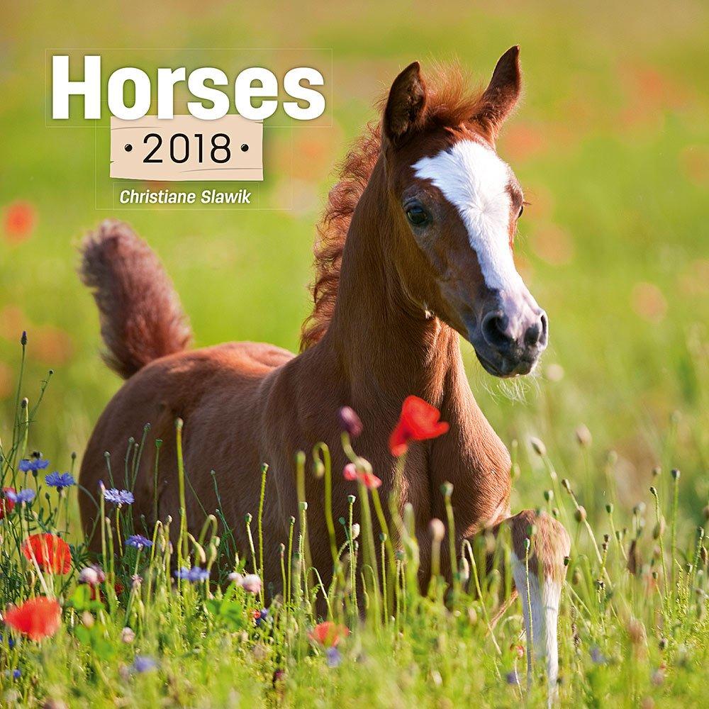Wild Horse Calendar - 2018 Calendar - Calendar 2017 - Horse Wall Calendar by Presco Group