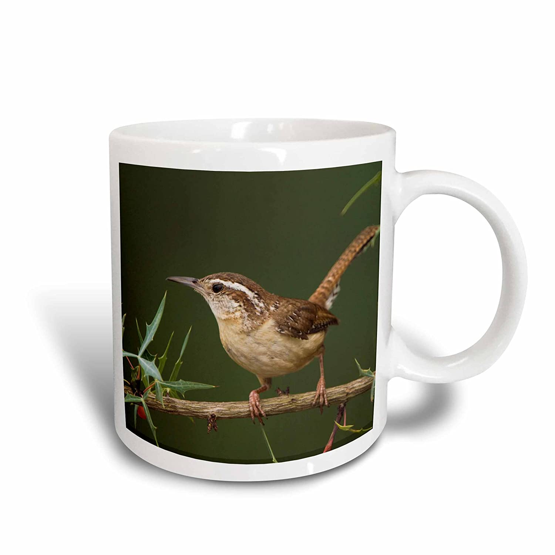 3dRose 84231_2'Carolina Wren Bird On Agarita, Hill Country Texas-NA02 RNU0063-Rolf Nussbaumer' Ceramic Mug 15 oz White