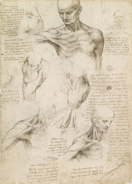 Vintage Anatomy LEONARDO da VINCI\'S SUPERFICIAL ANATOMY OF THE ...