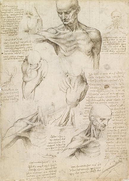 Vintage Anatomy Leonardo Da Vincis Superficial Anatomy Of The