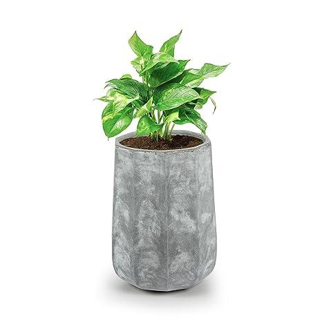 Blumfeldt Decaflor • Maceta para plantas • Tiesto • Fácil de colocar • Sin orificio de