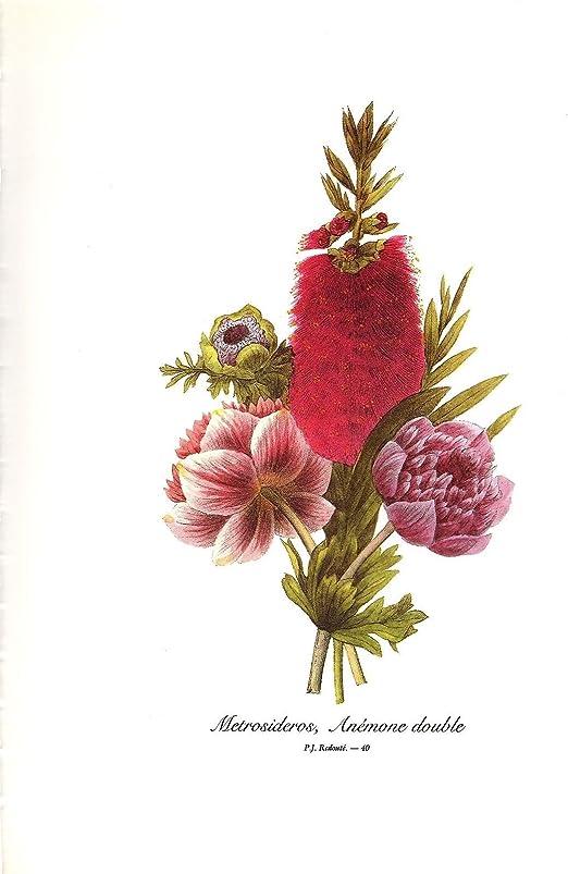 1991 Vintage REDOUTE BOUQUET #40 METROSIDEROS ANEMONE Color Art Print Lithograph